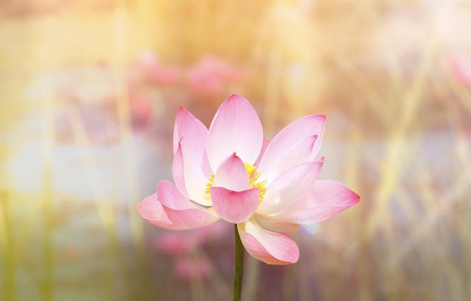 Free Gift: Soul Purpose Activation Meditation